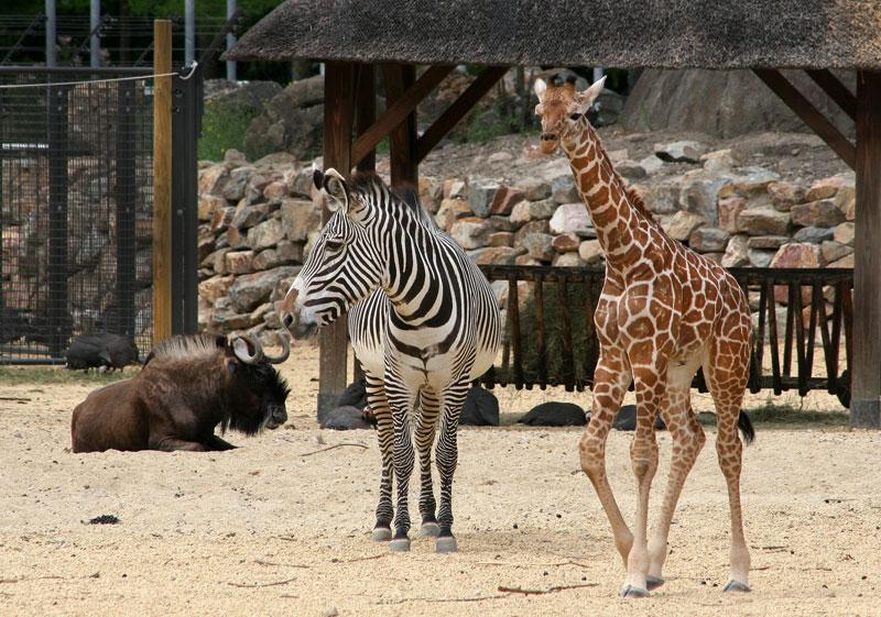 Uit met kinderen - dierentuin