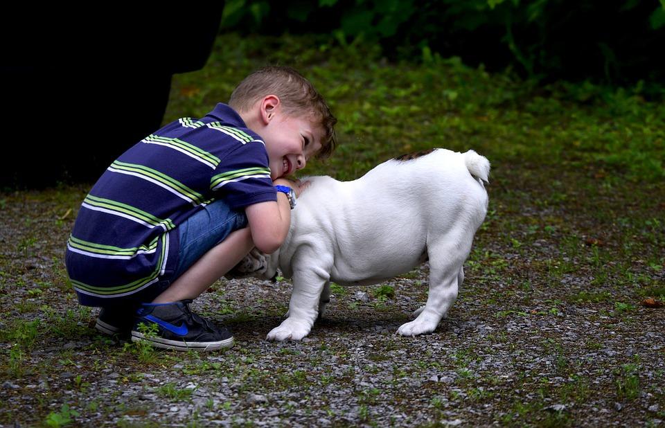 Hondenverzorging in het gezin