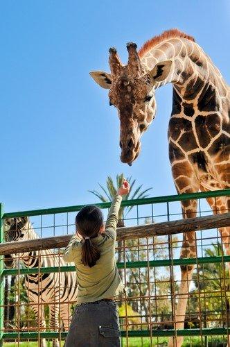Dierentuin amsterdam met kinderen vakantie in nederland