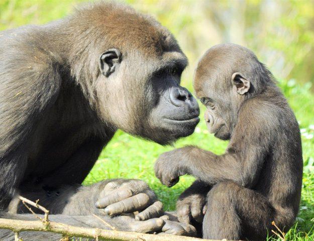 Gaia Zoo Zuid Limburg