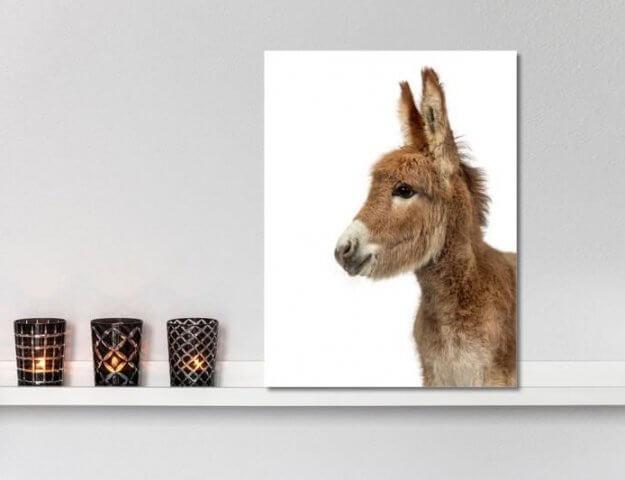 dier wanddecoratie