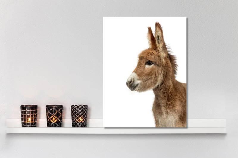Kinderkamer Ideeen Dieren : Schattige dier wanddecoraties voor de kinderkamer mamasopinternet