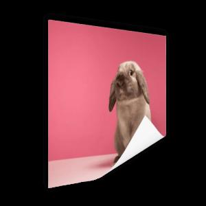 konijntjes aan de muur
