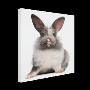 konijntjes aan de muur decoratie