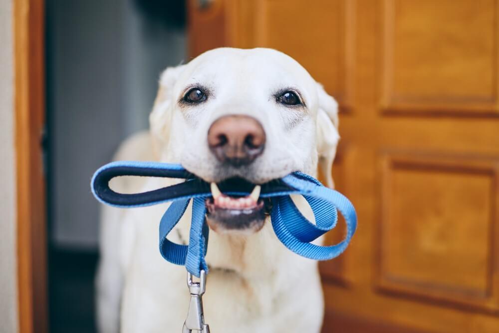 Op deze speelse manieren raakt je huisdier z'n energie kwijt