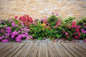 Zorg voor nieuwe planten en bloemen